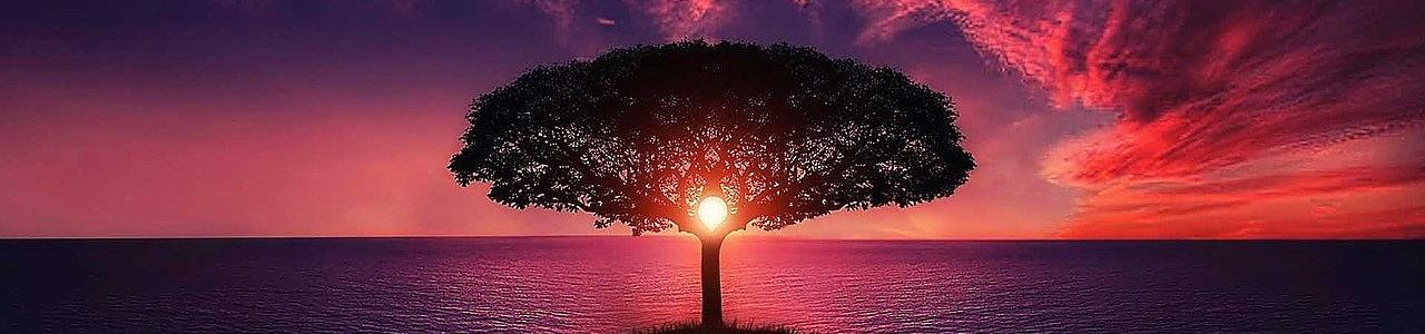 The Sunset and tree to life